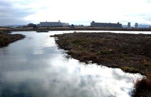 河川敷伐採跡