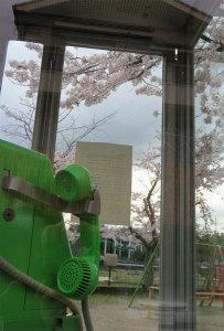 桜160404_02n